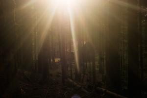 nancy-forest-4