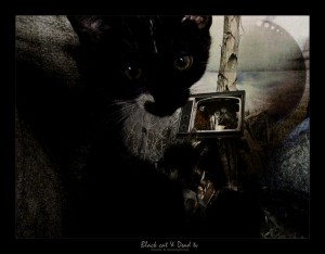 black cat and dead tv