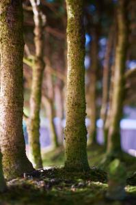 bonzai-forest-3