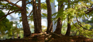 bonzai-forest